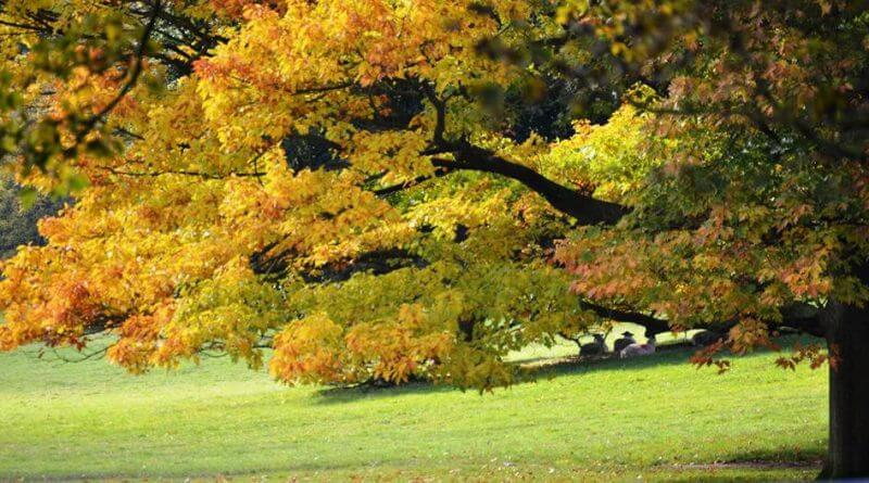 Guest Column: Even A Small Garden Can Have One Tree
