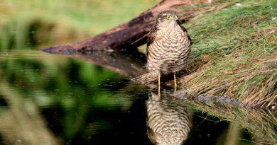 Wildlife Observations: Spring – Autumn 2016
