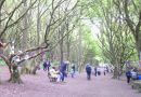 Woollen Woods Bring Enchantment To Town