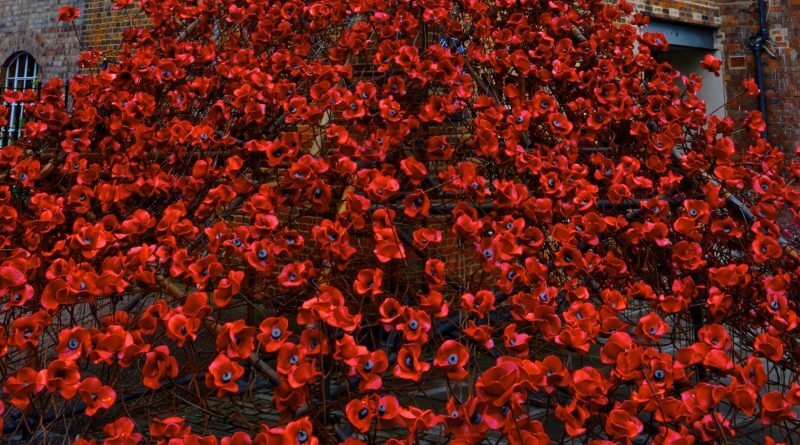 Weeping Window Poppy Display Comes To Silk Mill – Our Take