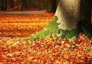 Autumn Observations:  Jo Kirk