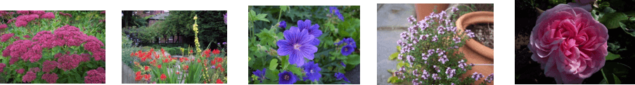 plant photographs