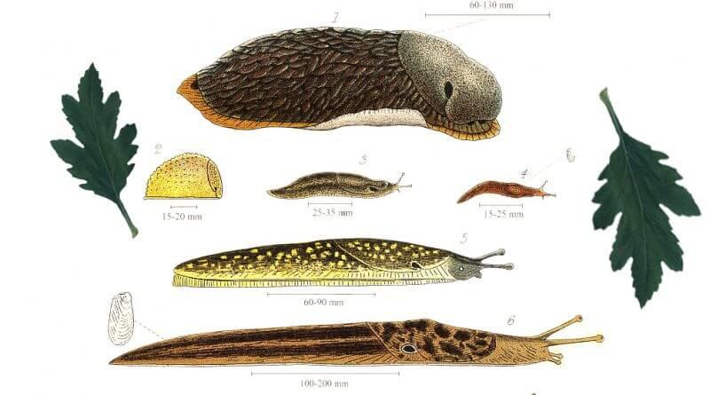 The Slug, the Bad and the Ugly