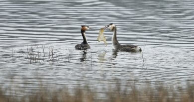 Plastic Pollution Affects Derbyshire Birds